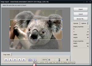 Figure-1-Koala