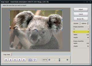 Figure-2-Koala
