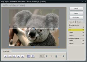Figure-3-Koala